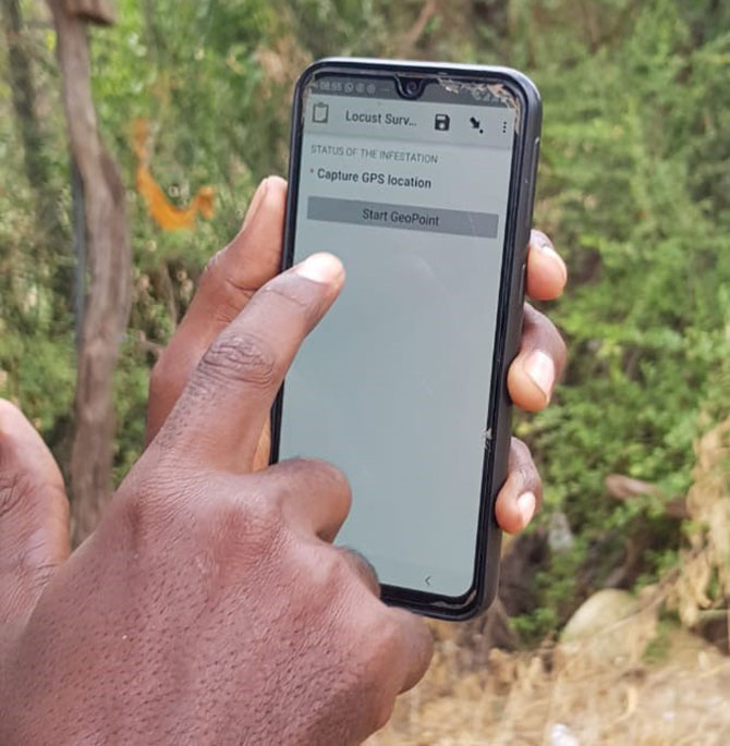 A community volunteer uses the mobile app developed by Oxfam to log locust infestations with local government spraying teams for action. Abdinoor Mohamed/WASDA