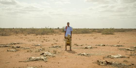 A man stands in a dry land surrounded by dead animals in Somaliland. Oxfam