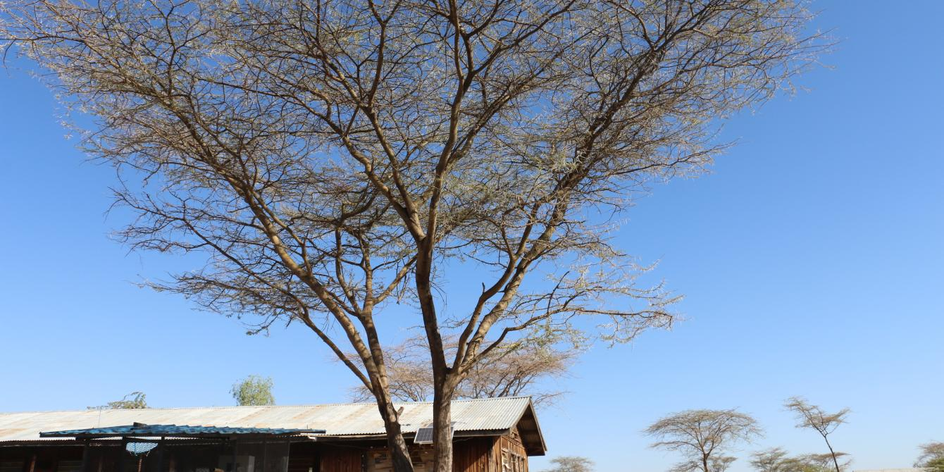 Lokwamusing, a village in Turkana county of Kenya. Photo Credit/Blandina Bobson