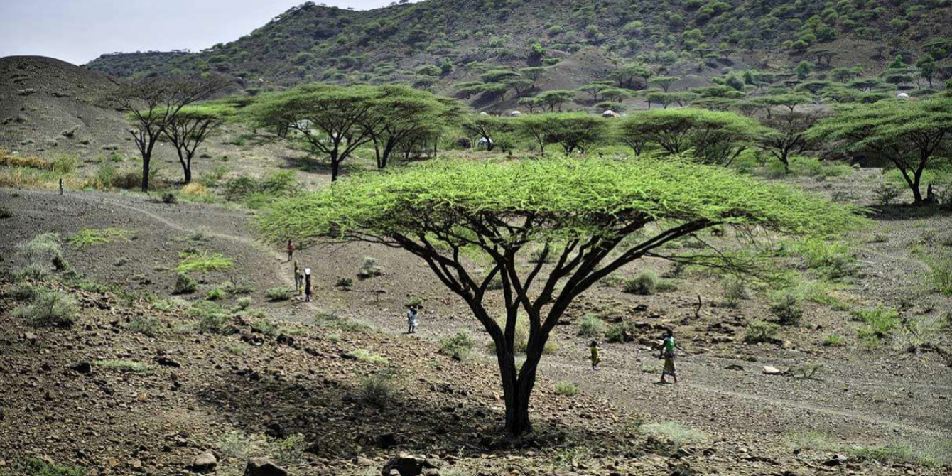 Residents walk under trees in Turkana, a remote region in western Kenya undergoing major oil exploration and extraction (Kieran Doherty / Oxfam Great Britain).