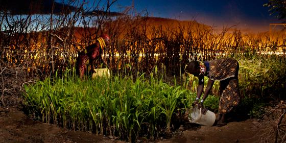 Women  gardening in their small farms in Turkana. Photo Credit: Alejandro Chaskielberg