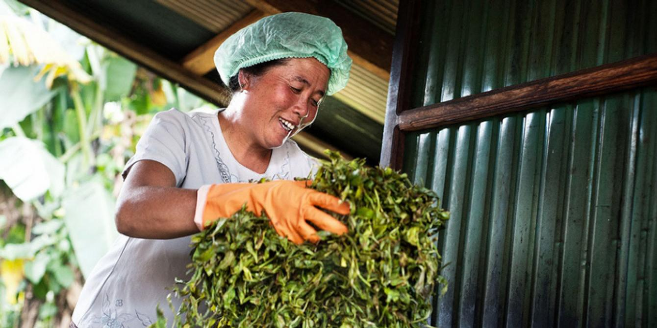 woman mix tea leaves