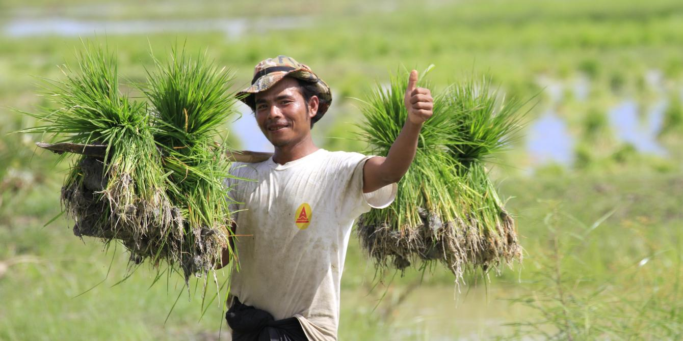 A man holding small plantation of rice in Myanmar's dryzone, Photo by: Hein Latt Aung/Oxfam