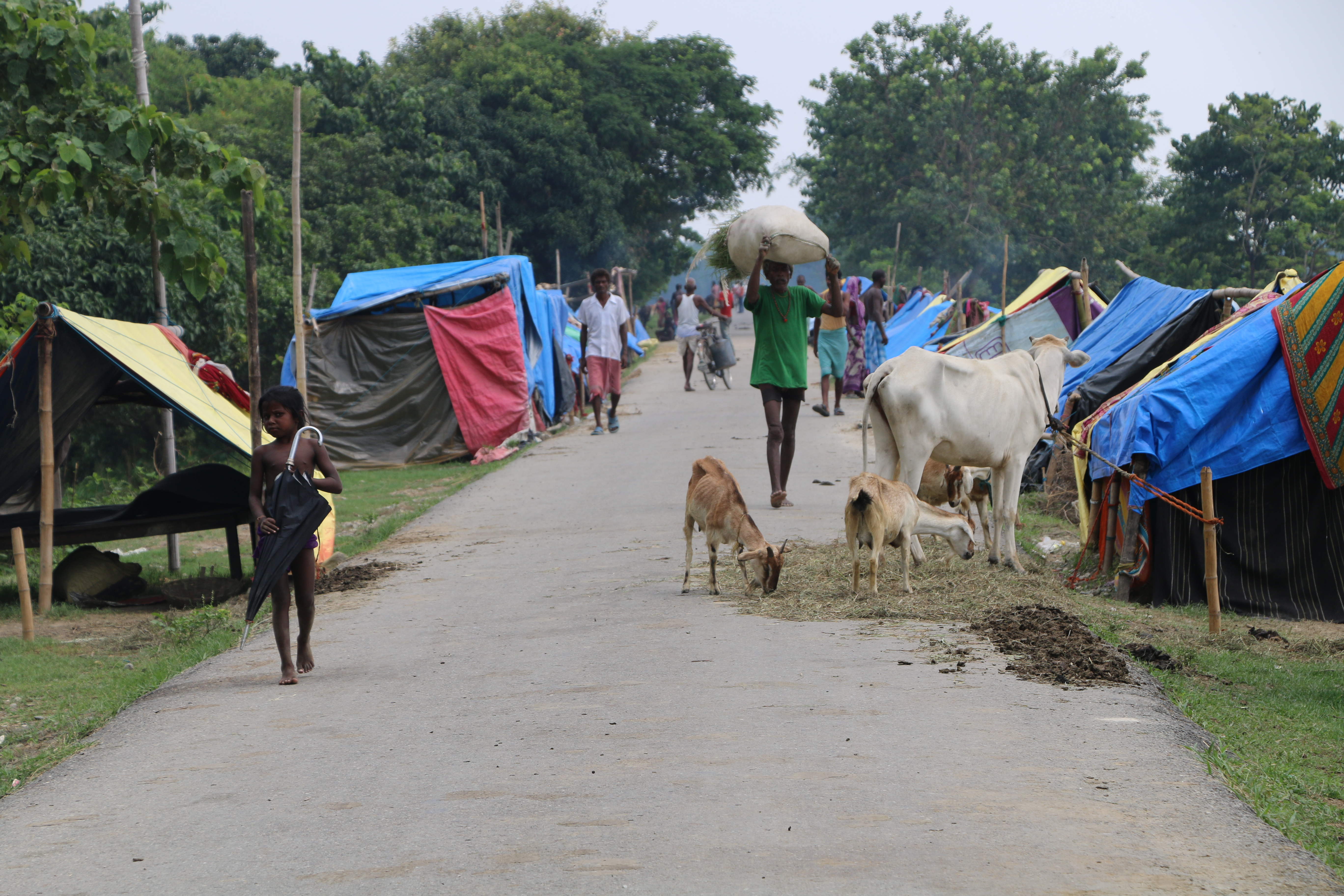People and cattle on an embankment in Saptari district