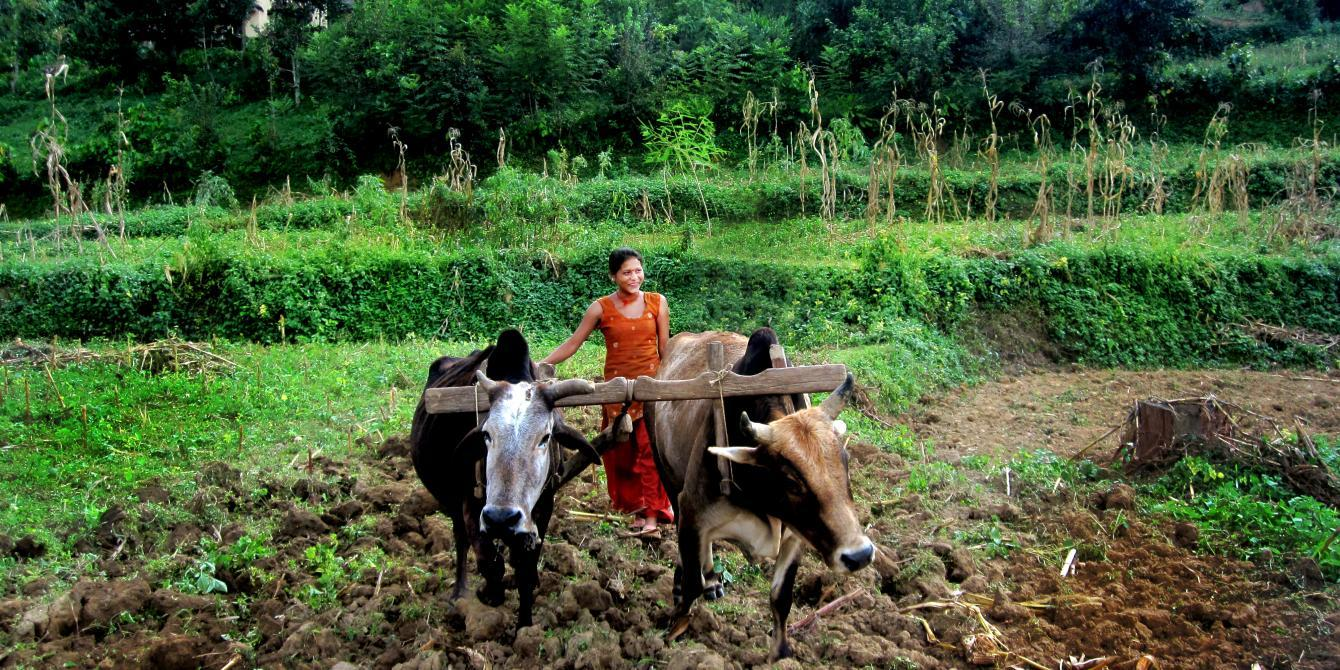 Sahara, a woman farmer, takes care of the plowing - Credit FEJ/Oxfam