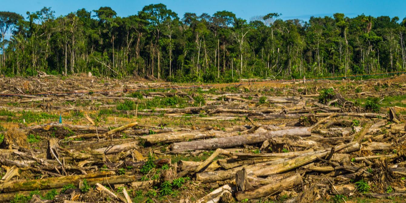 Resultado de imagen para deforestacion aceite de palma amazonia