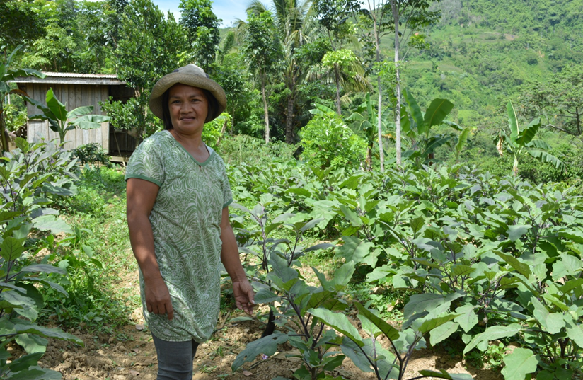 Arlene Rosales, 44, of Titulok Village is about to harvest her first batch of eggplants since the El Niño crisis struck her province of Sultan Kudarat. (Airah Cadiogan/Oxfam)