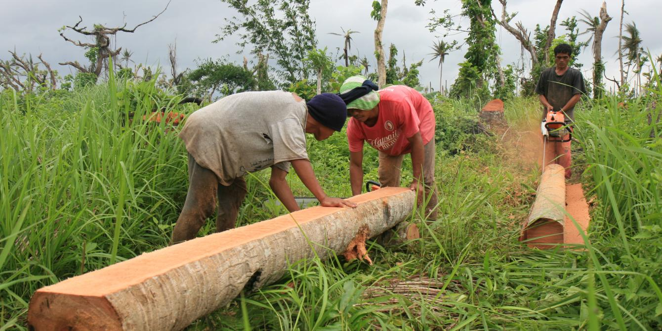 Chainsaw operators cut fallen coconut trees at the Kasaganahen Cooperative in Palo, Leyte. (Photo: Jane Beesley/Oxfam)