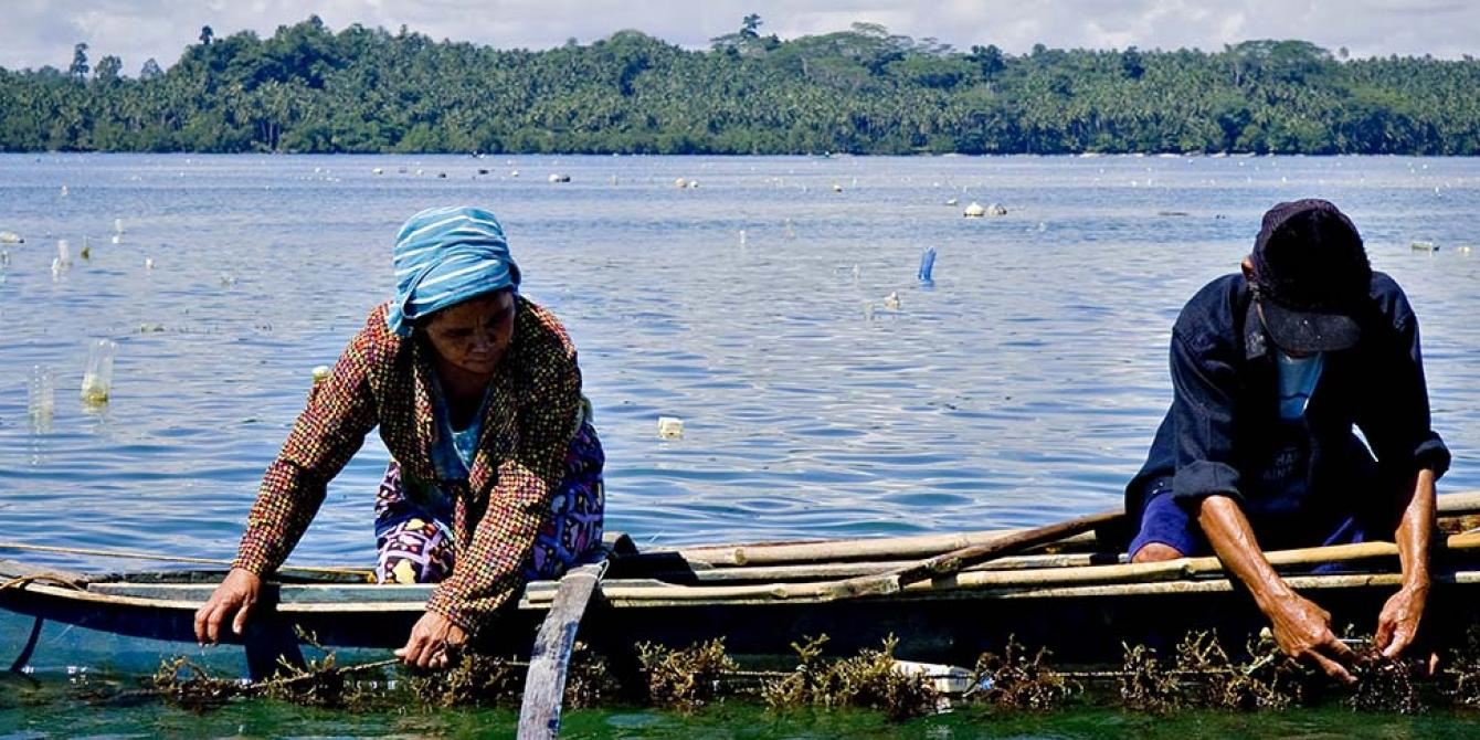 Seaweeds farmers harvesting (Photo: Veejay Villafranca)