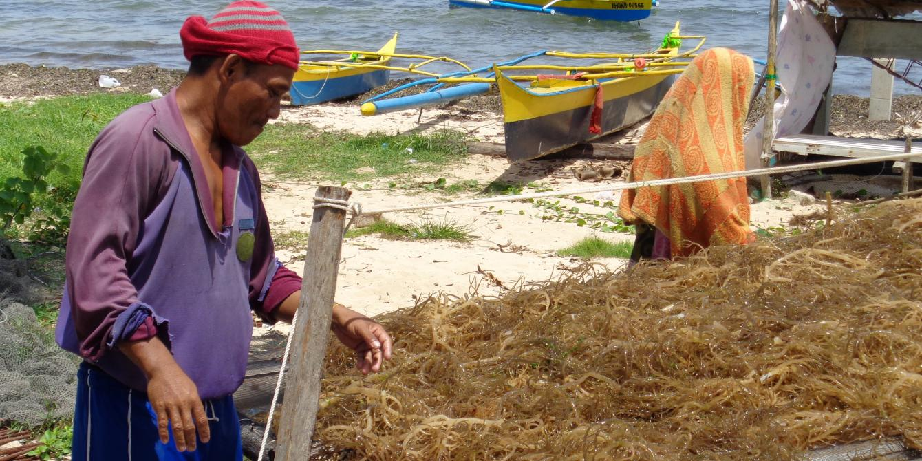 Seaweed farmer from Eastern Samar dries his product (Photo: Maria Carolina Bello/Oxfam)