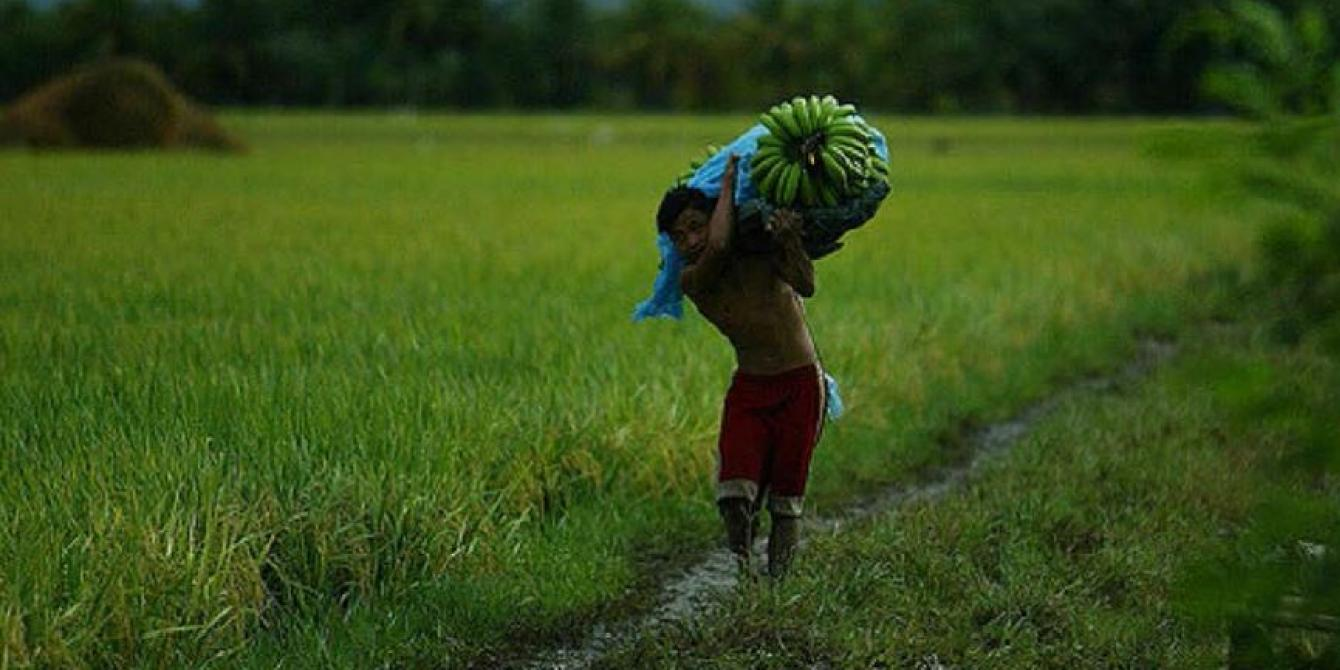 A worker carries a bunch of Cavendish bananas on a plantation in the Philippines. Bunches often weigh over 40 kilograms. (Photo: Keith Bacongco/Oxfam)