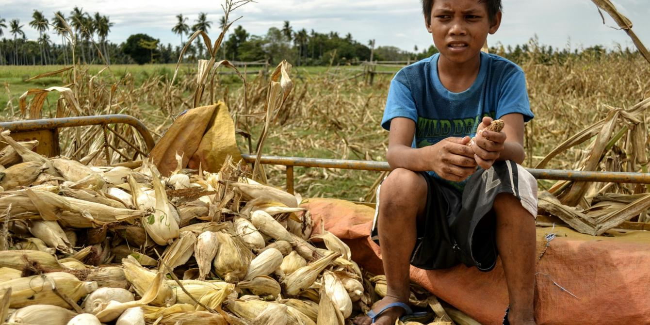 Corn harvest destroyed by drought in Mamasapano, Maguindanao (Photo by Rhea Catada/Oxfam)