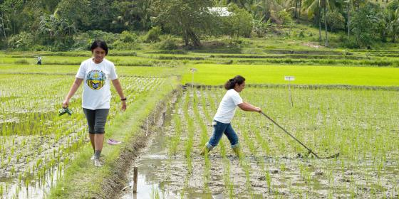 Emily Alpass demonstrates how to weed an organic paddy field. Oxfam has set up a number of Field Schools, giving farmers the opportunity to learn about new farming techniques and practices, grow new vegetable varieties, learn about climate change and making their own organic fertilizers.  Each field school has roughly 32 members at one time who attend sessions on a weekly basis for 6 months.Photo: Tessa Bunney/ Oxfam