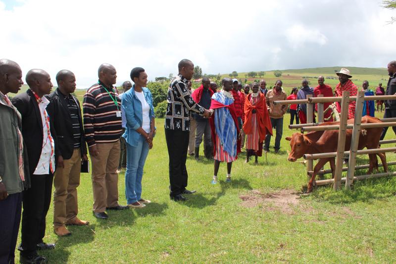 Hon. Hashim Mgandilwa, the District Commissioner of Ngorongoro handing over heifers. Photo: Bill Marwa / Oxfam