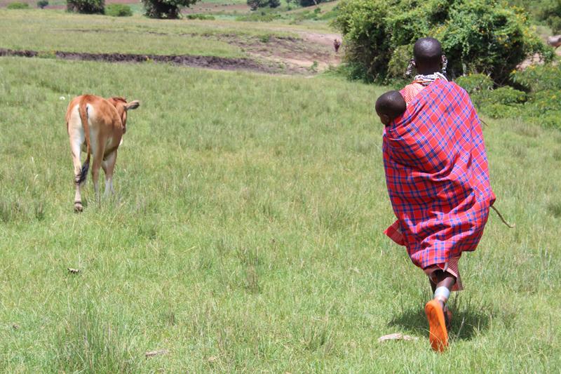 Nashuru having received her heifer. Photo: Bill Marwa / Oxfam