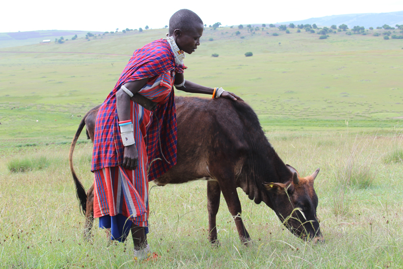 Nosiruayi is excited that her heifer has now had its first calf. Photo: Bill Marwa / Oxfam