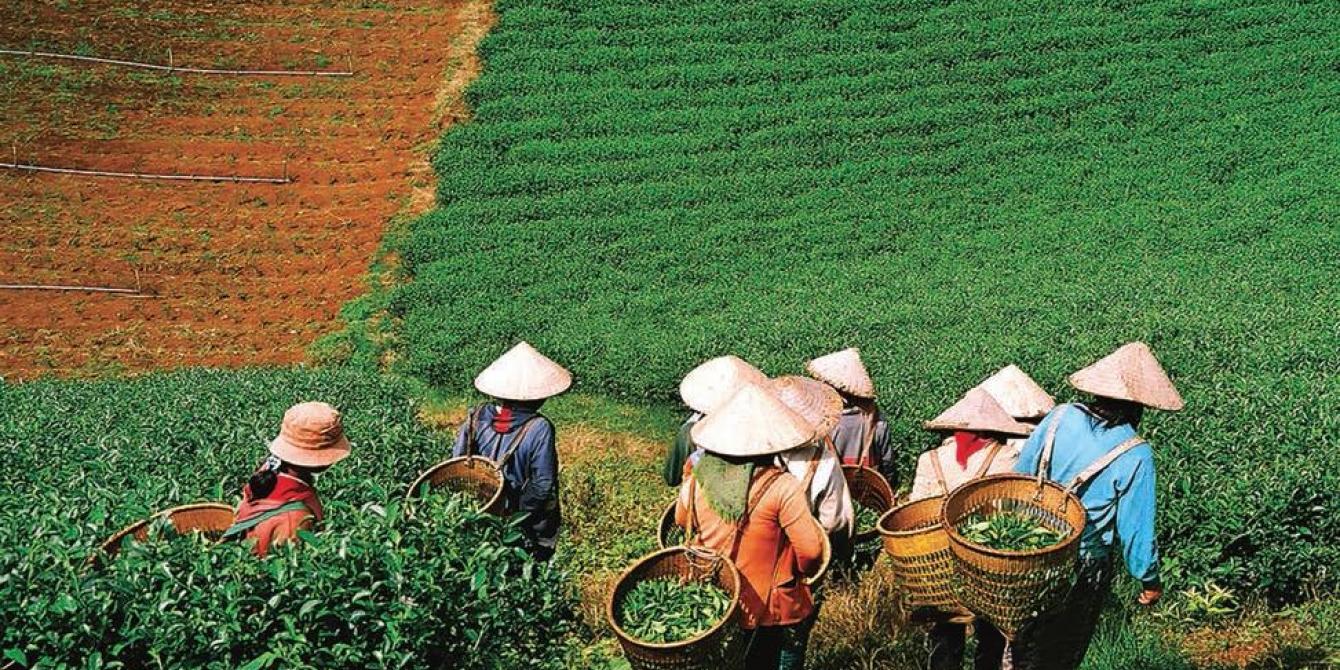 Farmers harvest their crops in central Vietnam. Credit: Oxfam Vietnam