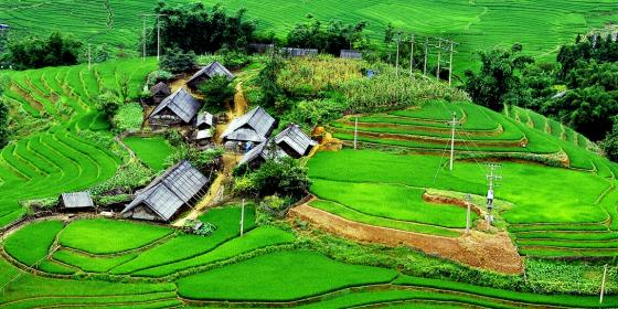 Rice paddies in northern Vietnam. Credit: Oxfam Vietnam
